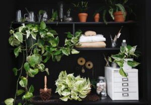 Pothos Collection